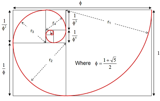 Golden section spiral diagram 1