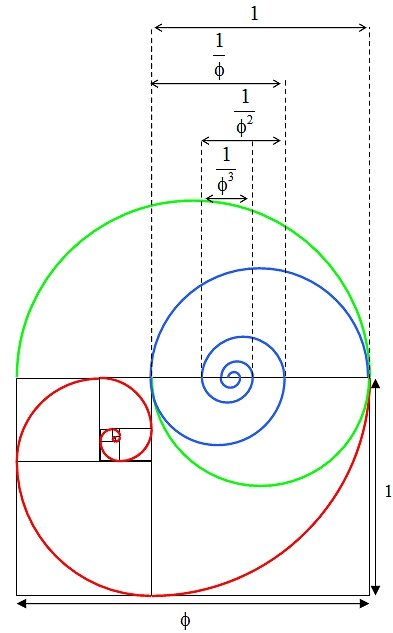 Golden section spiral diagram 4