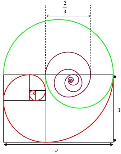 Golden section spiral diagram 6