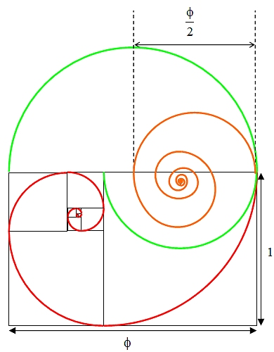 Golden section spiral diagram 7
